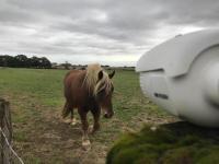Protection chevaux, vidéosurveillance des écuries, des fermes . Alarme sécurité