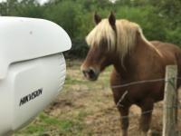 Installation de caméra pour la surveillance d'un cheval isolé à Chalon sur Saône
