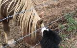 Protection chevaux, vidéosurveillance des écuries, des fermes. Alarme sécurité